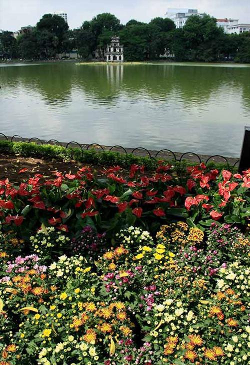 Dọc Hồ Gươm, các loại hoa được trồng mới trong các khuôn viên