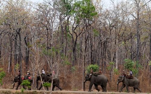 """""""Bộ phim là mâu thuẫn giữa người và người, voi và người, người và voi, voi và voi... mâu thuẫn giữa phát triển và bảo tồn. Những mâu thuẫn, xung đột là thứ câu khách, với từng đấy chất liệu nó làm tăng thêm tính hấp dẫn cho bộ phim""""- đạo diễn Trần Uy."""