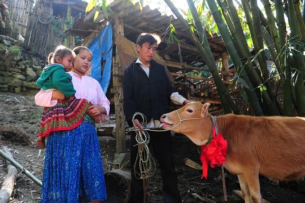 Vợ chồng anh Và Mi Vứ (huyện Mèo Vạc, tỉnh Hà Giang) vui vì được tặng bò