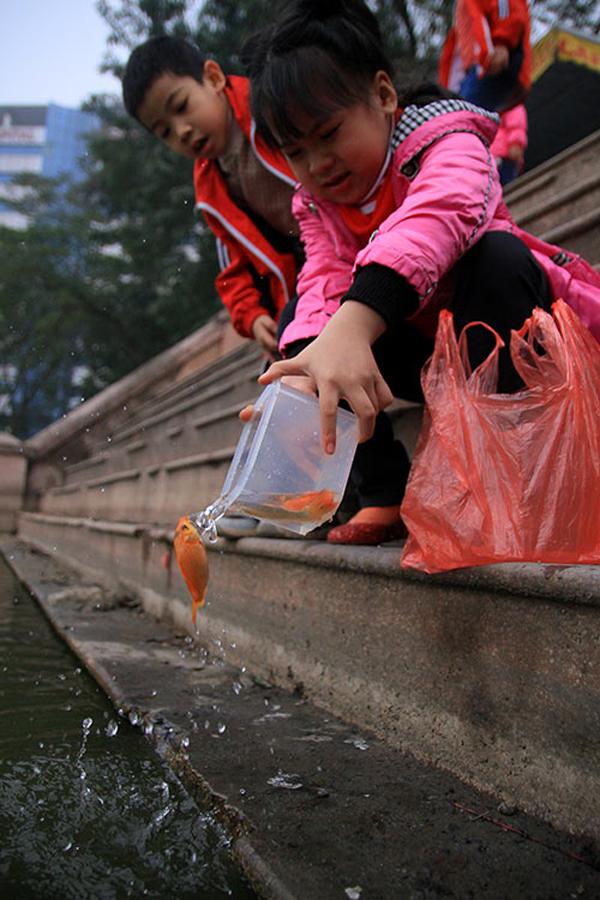 Một em nhỏ tự tay thả cá (ảnh: Khampha.vn)