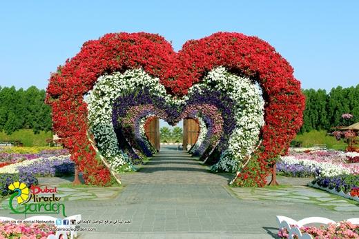 Dubai Miracle Garden là niềm tự hào của người dân Dubai đối với bạn bè thế giới.