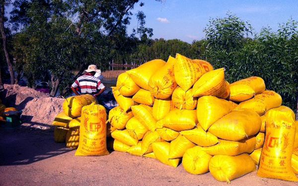Lúa ở ĐBSCL bước vào thời điểm thu hoạch rộ nhưng tốc độ thu mua tạm trữ chậm.