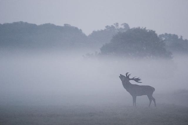 Chào buổi sớm giữa màn sương mù giăng lối