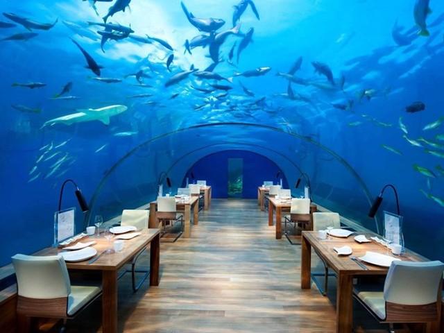 Conrad Maldives Rangali Island là khách sạn tuyệt đẹp dưới đáy đại dương, nằm trong tổ hợp resort và khách sạn Conrad Rangali thuộc vườn nhiệt đới đảo Rangalifinolhu (quốc đảo Mandives)