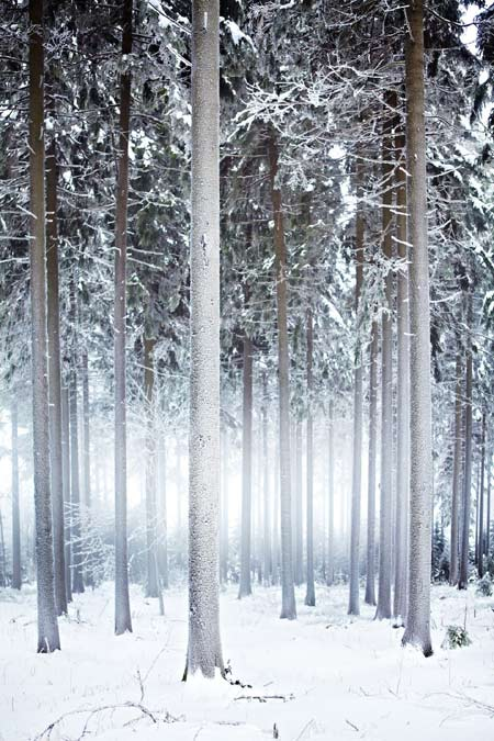 Thuringia ở Đức đẹp nhất vào mùa đông khi bao trùm lên tất cả là màu tuyết trắng tinh khôi, cây cối khoác trên mình những bông tuyết chưa kịp tan.
