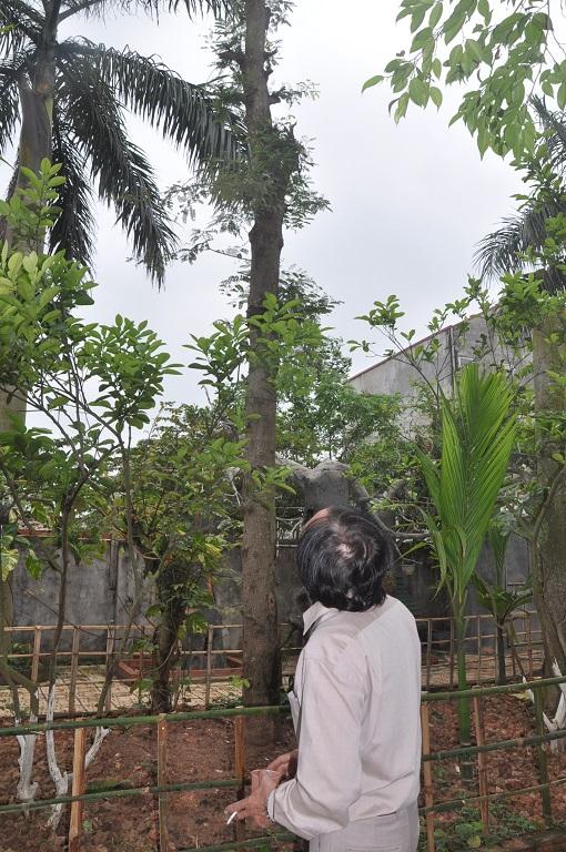 Trong vườn anh quý nhất là cây me được chuyển từ Phú Thọ mang về trồng.