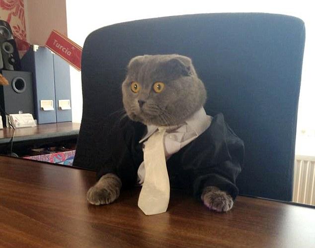 Chú mèo Bossy trong bộ vest sang trọng
