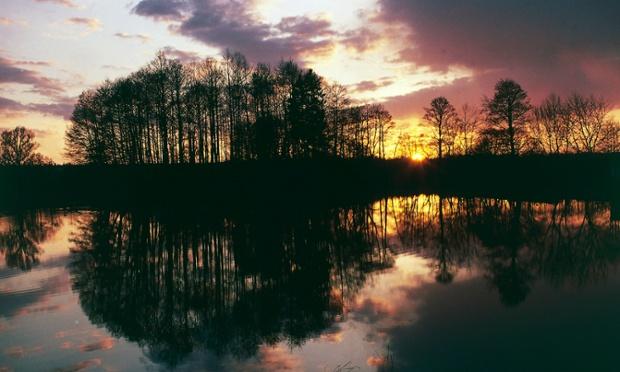 Mặt trời lặn ở công viên rừng quốc gia Białowieża, Ba Lan. Nguồn: De Agostini/Getty Images