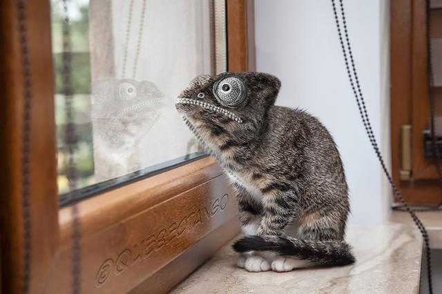 Ếch kết hợp với mèo tạo nên giống sinh vật có hình thù kém bắt mắt