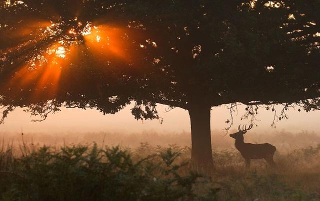 Con hươu nhỏ dừng lại chiêm ngưỡng ánh mặt trời xuyên qua tán cây
