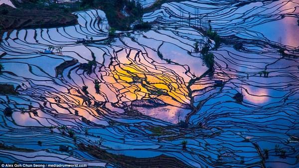 Sắc hoàng hôn của nền trời phản chiếu xuống cánh đồng ngập nước tạo nên bức tranh thiên nhiên sống động.