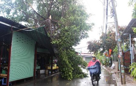 Hơn 30 căn nhà của người dân bị tốc mái, hư hỏng và hàng loạt cây xanh ngã đổ xuống đường.