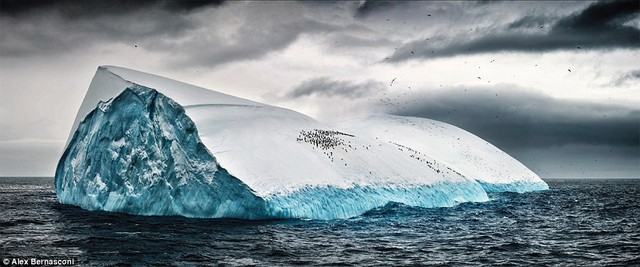 Bầy chim cánh cụt đứng trên tảng băng trôi ở Nam Đại Dương.