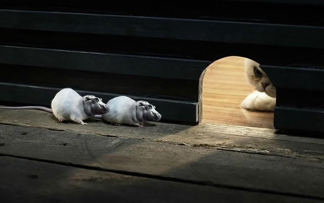 Khi hà mã được gắn đầu vào thân chuột