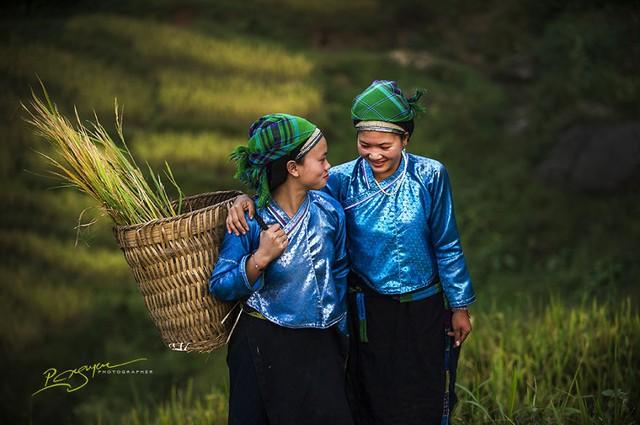 Thiếu nữ dân tộc Nùng trong mùa thu hoạch