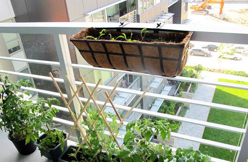 Ban công làm nơi trồng rau cũng là ý tưởng độc đáo.