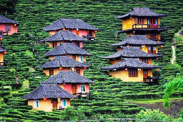 Những ngôi nhà nhỏ nhắn, xinh đẹp nằm ngay trên những đồi chè là nơi sinh sống của các gia đình người Hoa xa xứ từ nhiều thế hệ nay ở Ban Rak Thai. (Ảnh: Legalnomads).