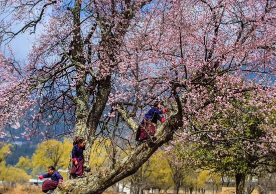 Cảnh thanh bình đất nước Bhutan. (Ảnh: Nguyễn Thanh Hải)