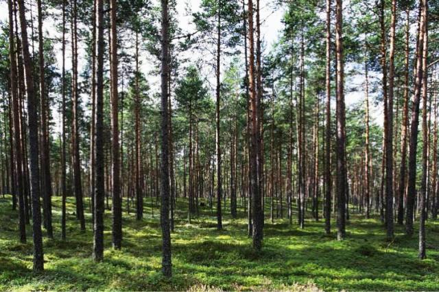 Các khu rừng mê hoặc của Vườn Quốc gia Lahemaa. (Ảnh: Getty Images)