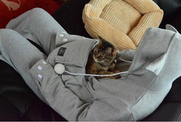 Kiểu áo kangoroo với túi bụng làm nơi trú ngụ cho những chú mèo cưng