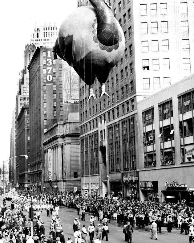 Rất đông người phải hợp sức để kiểm soát một con gà tây khổng lồ bằng hơi trong cuộc diễu hành chào mừng ngày Lễ Tạ ơn ở Quảng trường Herald năm 1957.