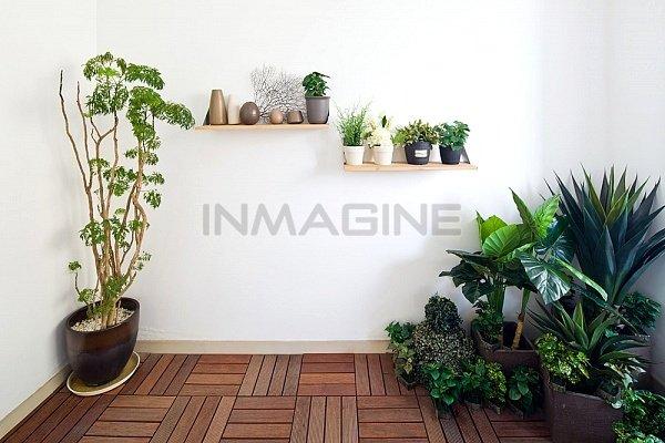 Trồng cây xanh trong nhà giúp không gian sống mát mẻ hơn.