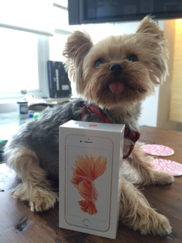 Vỏ hộp chiếc iPhone 6S đến tay người dùng sớm