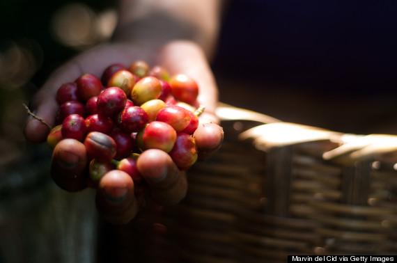 Khác với những nơi khác, cà phê của Nicaragua có vị ngọt, dịu đặc trưng