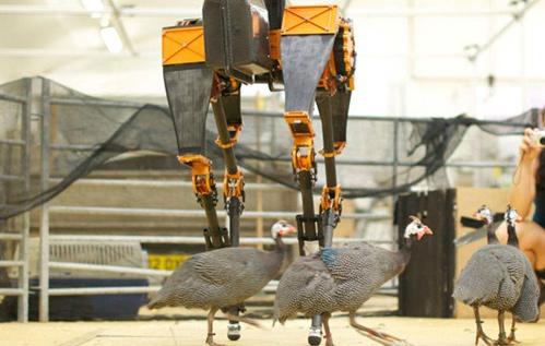 Atrias do các nhà nghiên cứu thuộc Đại học bang Oregon, Mỹ, chế tạo. Nó có hình dáng như một con chim. Đây là vận động viên chạy bằng hai chân nhanh nhất trên thế giới với khả năng giữ thăng bằng hoàn hảo, chịu lực những cú đá, đấm
