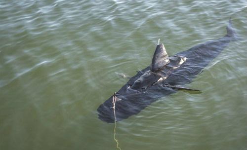Lực lượng Hải quân Mỹ mới triển khai một con cá mập robot gọi là GhostSwimmer unmanned underwater vehicle (UUV) dài 1,52 mét nặng 45,3 kg. Nó có thể thực hiện các nhiệm vụ tình báo, giám sát và trinh sát, cũng như kiểm tra tàu biển
