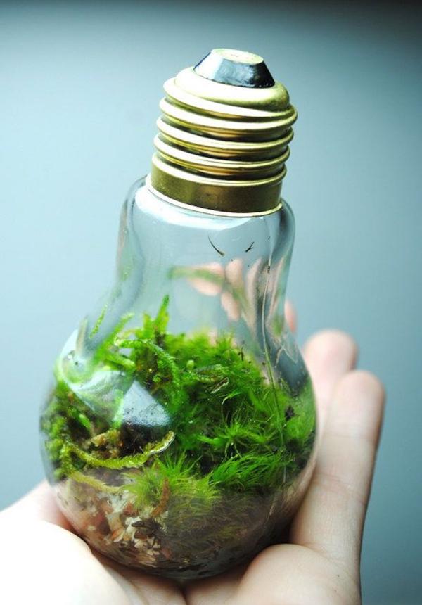 Bạn là một người yêu thiên nhiên, hãy thử trồng cây bằng chậu đèn thủy tinh như thế này.