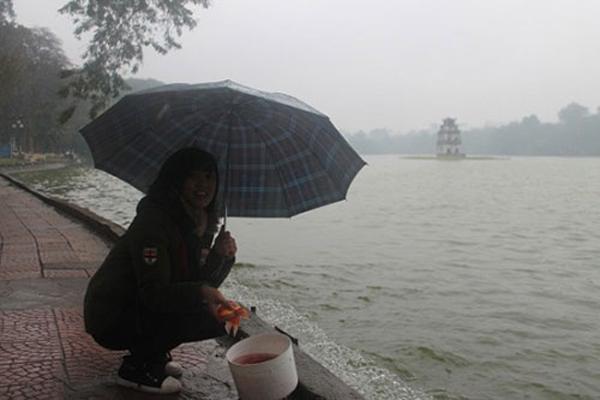 Người dân Hà Nội đội mưa đi thả cá ở Hồ Gươm (ảnh: Báo Công lý)