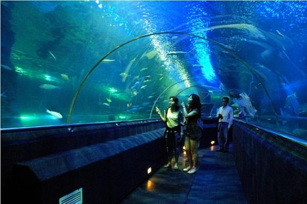 Thủy cung - Vinpearl Aquarium luôn là điểm thu hút tại thủ đô bởi sự mới mẻ.