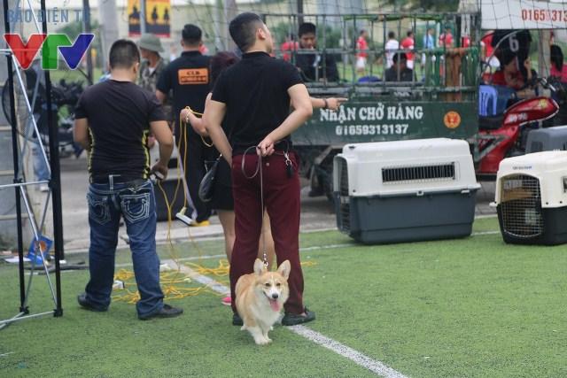 Có một vài giống chó khác tới giao lưu và học hỏi kinh nghiệm tại sự kiện