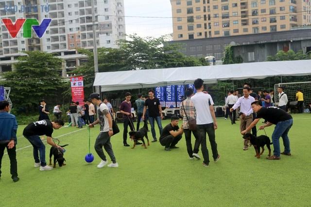 Rất nhiều chú chó từ khắp miền Bắc cùng đến tham gia cuộc thi