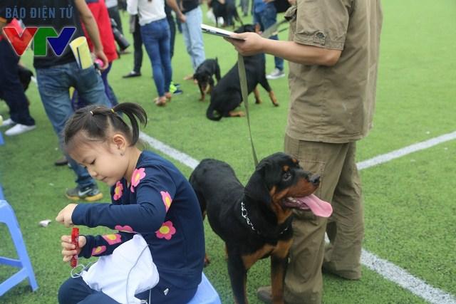 Loài chó Rottweiler rất thân thiện và điềm tĩnh
