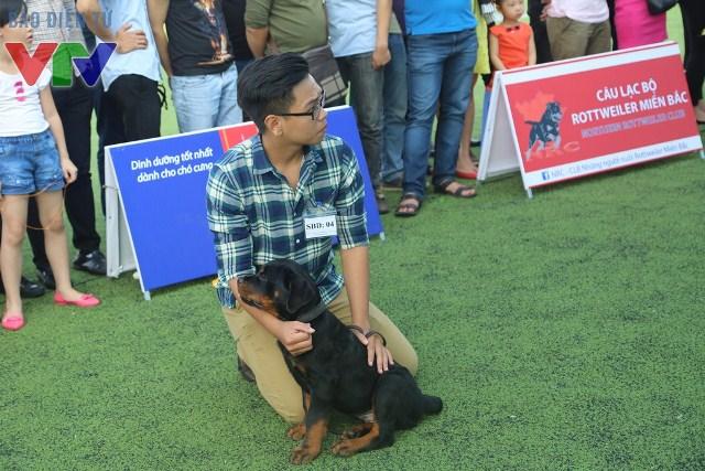 Một chú chó baby đang chờ đến lượt để được ban giám khảo đánh giá