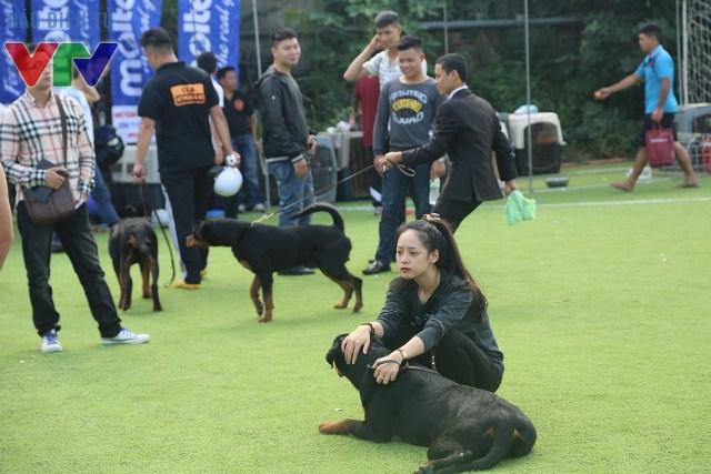 Rất nhiều chú chó chờ đợi đến lượt mình tham gia thi