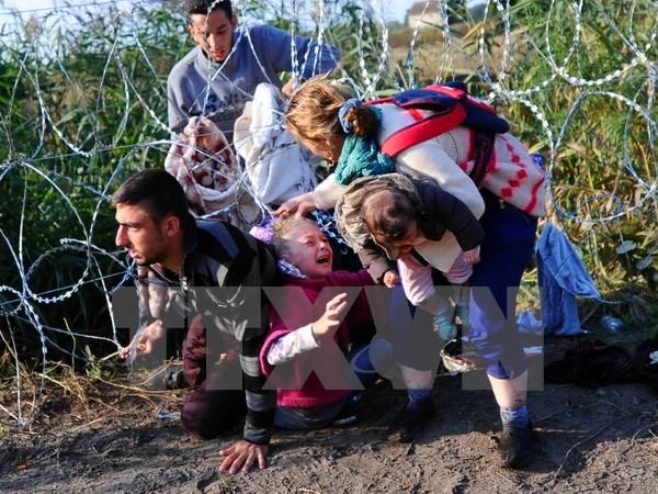 Người di cư vượt qua hàng rào dây thép gai gần Roszke, giáp giới Serbia ngày 27/8. (Ảnh: AFP/TTXVN)