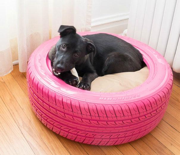 Bạn cũng có thể dùng lốp xe làm chốn riêng cho thú cưng.