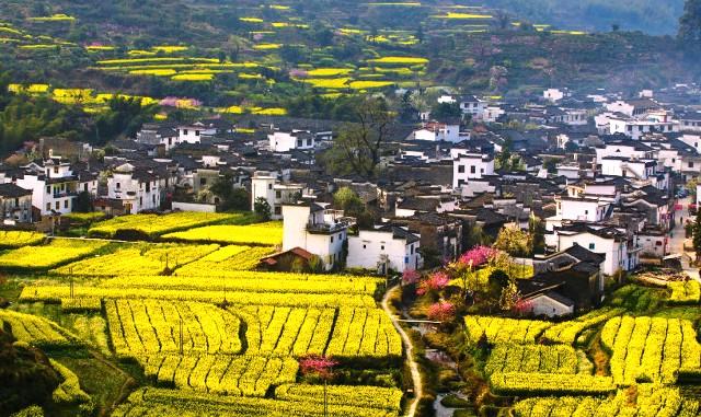 Bên cạnh màu hoa cải vàng rực, Wuyuan còn được tô điểm bởi những cành đào hồng và những hàng cây, bụi cỏ xanh ngắt tuyệt đẹp. (Ảnh: easytourchina.com)