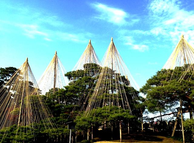 Các yukitsuri bảo vệ cây trong mùa Đông tại Công viên Kenrokuen.