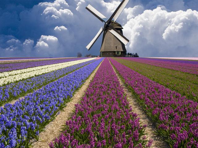 Những cánh đồng hoa tulip bạt ngàn với đủ màu sắc khiến bạn khó rời mắt