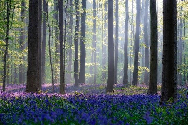 Thời gian chụp ảnh đẹp nhất là sáng sớm và cuối ngày khi độ tương phản giữa ánh sáng và bóng tối nhẹ hơn. Với sự kiên nhẫn, bạn có thể lọc được ánh sáng thông qua lá của các cây sồi.
