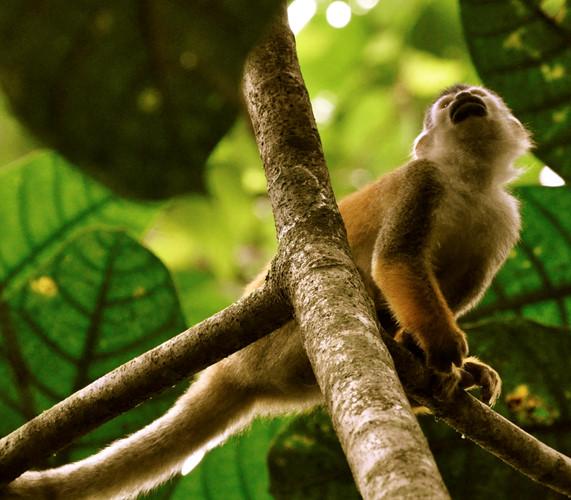 """hi thoảng, những chú khỉ cũng """"vòi vĩnh"""" khách du lịch. Và bạn cũng có thể chia sẻ với chúng."""