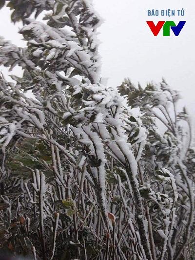 Nhiệt độ liên tục giảm xuống khiến Tam Đảo - Vĩnh Phúc xuất hiện nhiều băng tuyết