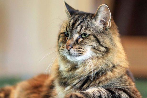 Chú mèo Corduroy có hơn 2.400 người theo dõi trên Instagram, Facebook, Snapchat.