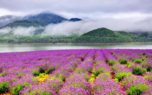 """Địa danh này nổi tiếng với những khu nghỉ dưỡng trượt tuyết. Nơi này được so sánh với """"thiên đường của tạo hóa"""", đồng thời là đảo lớn thứ 2 ở Nhật Bản. Cảnh quan thiên nhiên ưu đãi cùng lợi thế về khí hậu, Hokkaido mang nhiều nét đẹp rất khác lạ của """"xứ sở phù tang""""."""