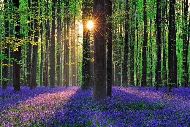 Toàn bộ cánh rừng như chuyển thành một biển màu xanh rực rỡ.