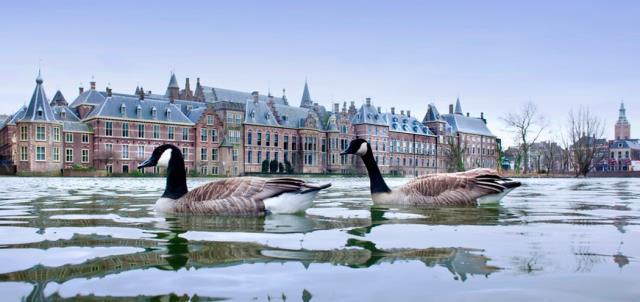 Người Hà Lan chia sẻ nguồn nước với những loài động vật hoang dã